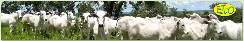 c740a8de19652 O trabalho desenvolvido na Faculdade de Ciências Agrárias e Veterinárias -  UNESP, campus de Jaboticabal, resultou na formação do Grupo de Estudos e ...